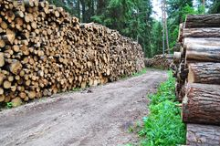 Timber industry Royalty Free Stock Photography