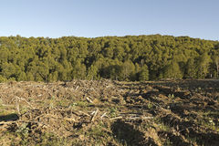 Timber industry in Chile Royalty Free Stock Photography