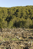 Timber industry in Chile Royalty Free Stock Images