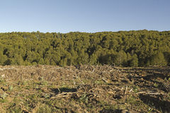 Timber industry in Chile Royalty Free Stock Photos