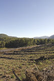 Timber industry in Chile Stock Images