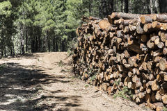 Timber industry Stock Images