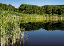 Timber lake Stock Photography
