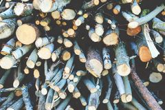Timber. From latvian forest.Vintage Stock Image
