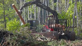 Timber loading, logging, timber loading with a claw. Timber loading, timber processing, timber loading with a claw stock video