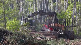 Timber loading, logging, timber loading with a claw. Timber loading, timber processing, timber loading with a claw stock footage
