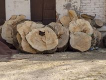 Timber log slices. For using furniture front of carpenter royalty free stock photo