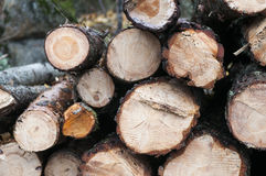 Timber Log Stack. Pine timber log stack in the forest stock photography