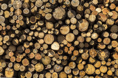 Timber log stacks background, front view Royalty Free Stock Image
