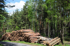 Timber Logging in Forest Stock Image