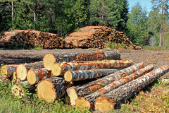 Timber Logging in Forest Royalty Free Stock Photos
