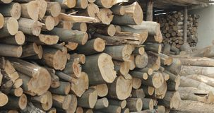 Timber logging. Freshly cut tree wooden logs piled up. Wood storage for industry.  royalty free stock photos