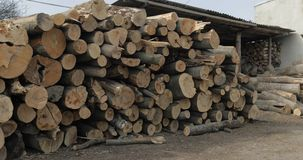 Timber logging. Freshly cut tree wooden logs piled up. Wood storage for industry.  stock photography