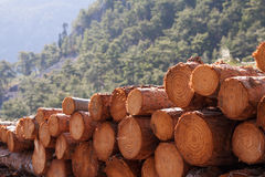 Timber logging Royalty Free Stock Photo