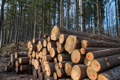Timber logging Stock Images