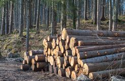 Timber logging Stock Image