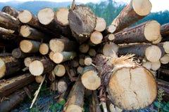 Timber logs Stock Photos