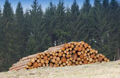 Timber logs royalty free stock images