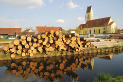 Timber logs Stock Image