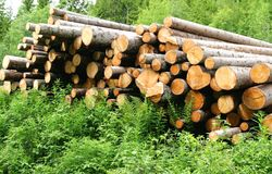 Timber logs. Pile of timber logs in a forest Royalty Free Stock Photos