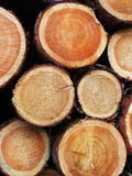 Timber logs background Royalty Free Stock Photos