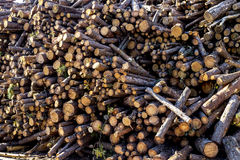 Timber logs background Royalty Free Stock Photography