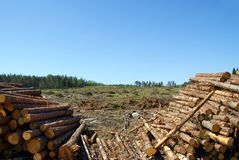 Timber Logs at Clear Cut Stock Photos