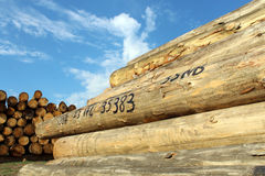 Timber logs in the depot Stock Photography