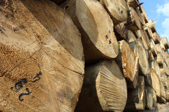 Timber logs in the depot Royalty Free Stock Image