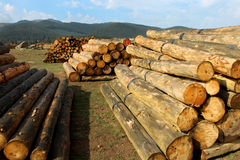 Timber logs in the forest Royalty Free Stock Image