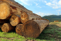 Timber logs in the forest Stock Photos
