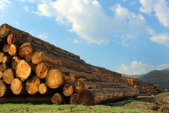 Timber logs in the forest Stock Image