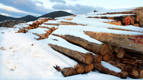Timber logs in the forest Stock Photography