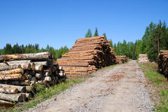 Timber Logs By Forest Road. Piles of timber logs (pine, birch, spruce, aspen) by a forest road in early summer ready for transport. Photographed in Salo, Finland Stock Photo