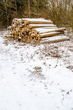 Timber logs in winter Stock Image
