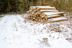 Timber logs in winter Royalty Free Stock Photography