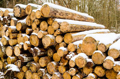 Timber logs in winter Royalty Free Stock Photo