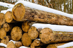 Timber logs in winter Royalty Free Stock Images