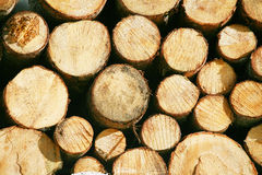 Timber lumber balk beam short.  Royalty Free Stock Photography