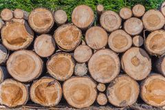 Timber Lumber Industry Royalty Free Stock Photo