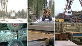 Timber and lumber industry. Parquet board production. Collage. stock video