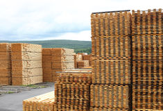 Timber or Lumber Yard with Stacked Pine Stock Images