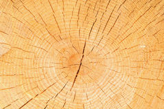 Timber natural background. Royalty Free Stock Photography