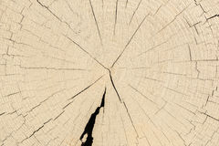 Timber Royalty Free Stock Image