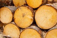 Timber pattern stock image