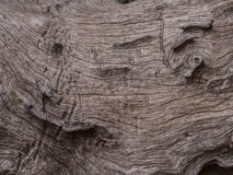 Timber. Pattern on timber It is a natural beauty Royalty Free Stock Photography