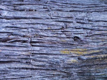 Timber. Pattern on timber It is a natural beauty Stock Photography