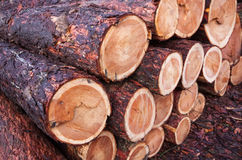 Timber pattern Stock Image