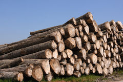 Timber pile. Perspective of sawn trees (horizontal Stock Image
