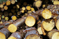 Timber Pile. Closeup of stacks of cut timber royalty free stock photography
